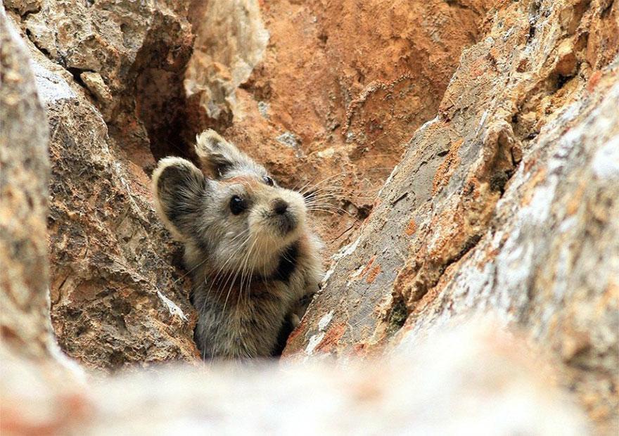 rare-endangered-animal-teddy-bear-magic-